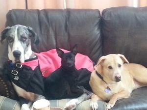 Daisy, Roscoe & Peanut